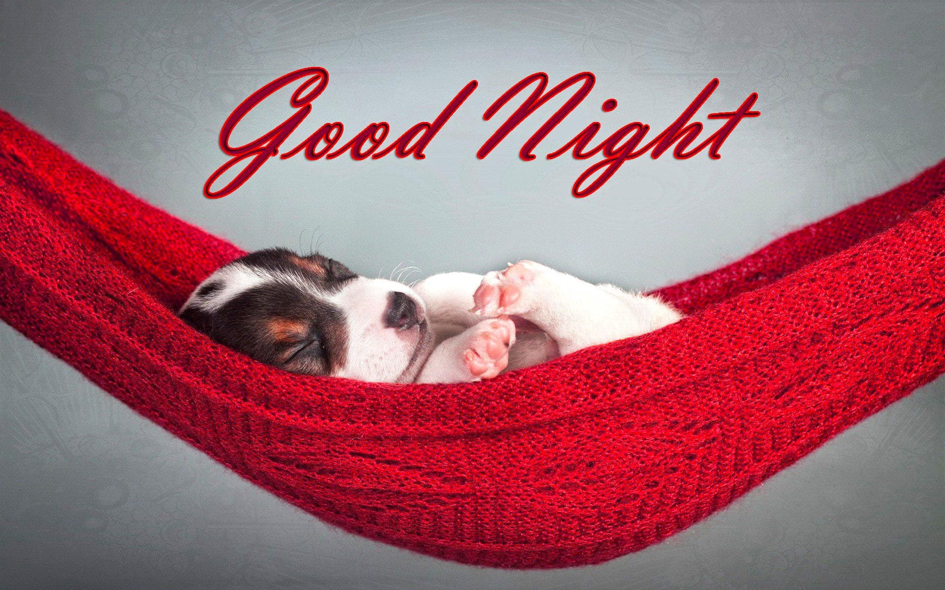 Latest 100 Good Night Text Messages, Wishes & Quotes for Him